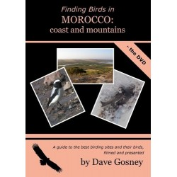 Finding birds in Morocco:...
